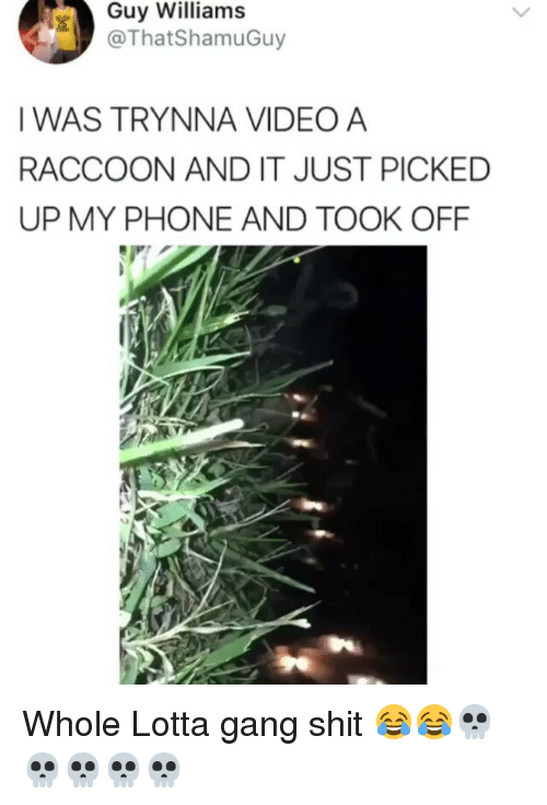 Gangly: Guy Williams  @ThatShamuGuy  IWAS TRYNNA VIDEO A  RACCOON AND IT JUST PICKED  UP MY PHONE AND TOOK OFF Whole Lotta gang shit 😂😂💀💀💀💀💀