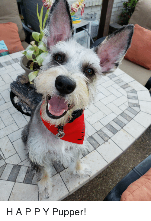 World, Smiles, and Dog: H A P P Y Pupper!