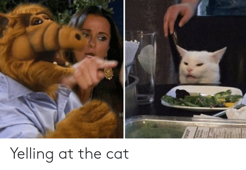 Cat, Yelling, and The: H Yelling at the cat