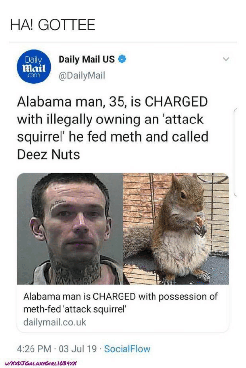 Deez Nuts, Alabama, and Daily Mail: HA! GOTTEE  Daily  Daily Mail US  Mail@DailyMail  com  Alabama man, 35, is CHARGED  with illegally owning an 'attack  squirrel' he fed meth and called  Deez Nuts  Alabama man is CHARGED with possession of  meth-fed 'attack squirrel'  dailymail.co.uk  4:26 PM 03 Jul 19 SocialFlow  UXXDJGALAXYGIRLIOSYX