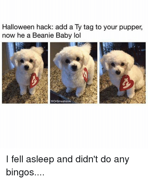 beanie baby: Halloween hack: add a Ty tag to your pupper,  now he a Beanie Baby lol  @DrSmashlove I fell asleep and didn't do any bingos....