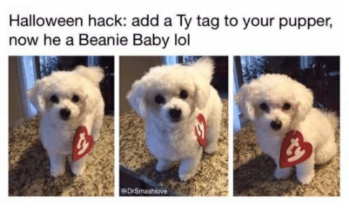 beanie baby: Halloween hack: add a Ty tag to your pupper,  now he a Beanie Baby lol  @DrSmashlove