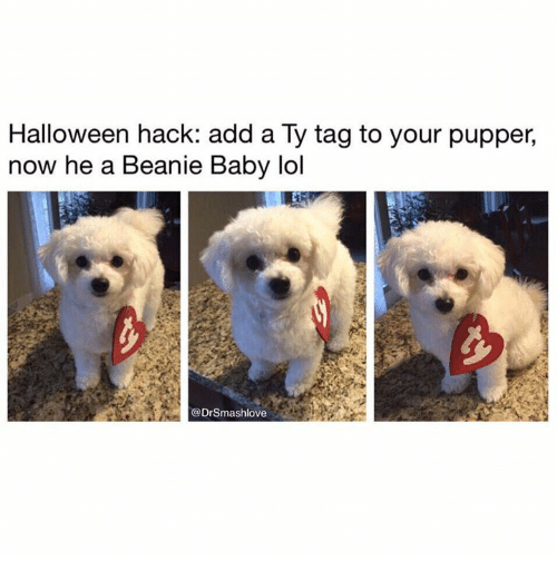 Baby, It's Cold Outside, Dank, and Halloween: Halloween hack: add a Ty tag to your pupper,  now he a Beanie Baby lol  @DrSmashlove
