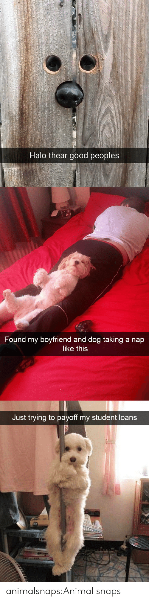 Student Loans: Halo thear good peoples   Found my boyfriend and dog taking a nap  like this   Just trying to payoff my student loans animalsnaps:Animal snaps