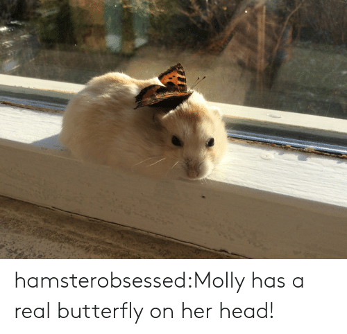 molly: hamsterobsessed:Molly has a real butterfly on her head!