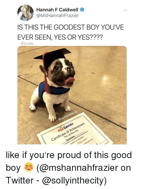 Memes, Twitter, and Good: Hannah F Caldwell  OMsHannahFrazier  IS THIS THE GOODEST BOY YOU'VE  EVER SEEN, YES OR YES????  @bustle  @sollyinthecity  Certificate of Achievement  This certifies that like if you're proud of this good boy ☺️ (@mshannahfrazier on Twitter - @sollyinthecity)