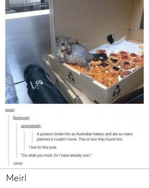 "Australian: HAOLIAY  SWOZ:  flextrovert  gnometeeth  A possum broke into an Australian bakery and ate so many  pastries it couldn't move. This is how they found him.  I live for this post  ""Do what you must, for I have already won.""  christ Meirl"