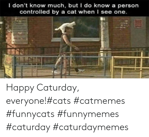 Caturday: Happy Caturday, everyone!#cats #catmemes #funnycats #funnymemes #caturday #caturdaymemes