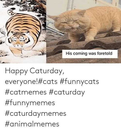 Cats: Happy Caturday, everyone!#cats #funnycats #catmemes #caturday #funnymemes #caturdaymemes #animalmemes