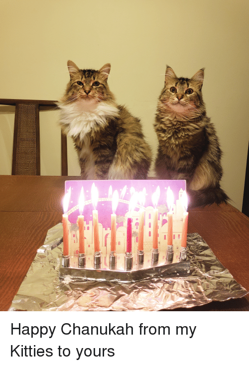 Kitties, Happy, and Chanukah: Happy Chanukah from my Kitties to yours