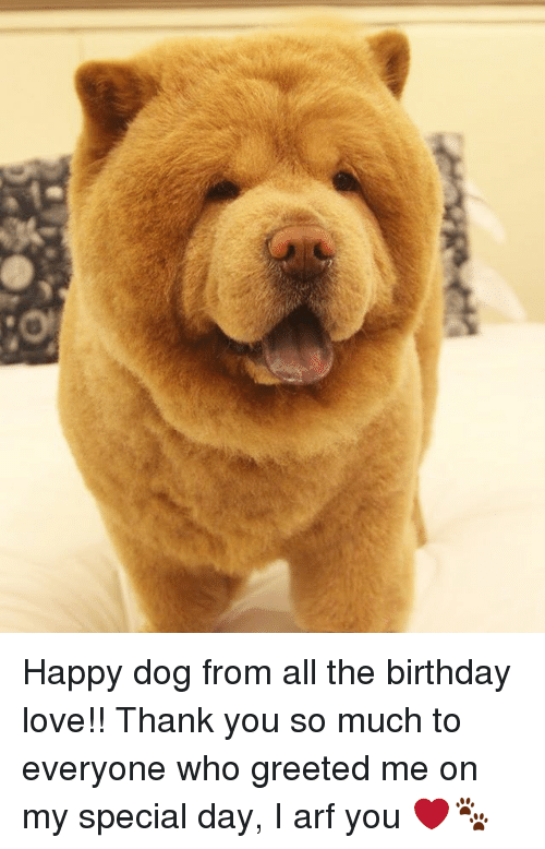 Birthday, Love, and Memes: Happy dog from all the birthday love!! Thank you so much to everyone who greeted me on my special day, I arf you ❤🐾