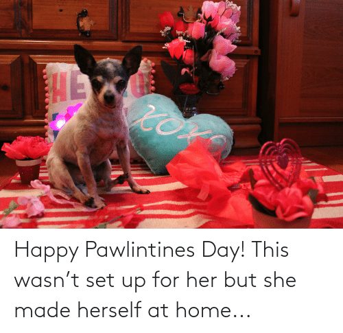Herself: Happy Pawlintines Day! This wasn't set up for her but she made herself at home...