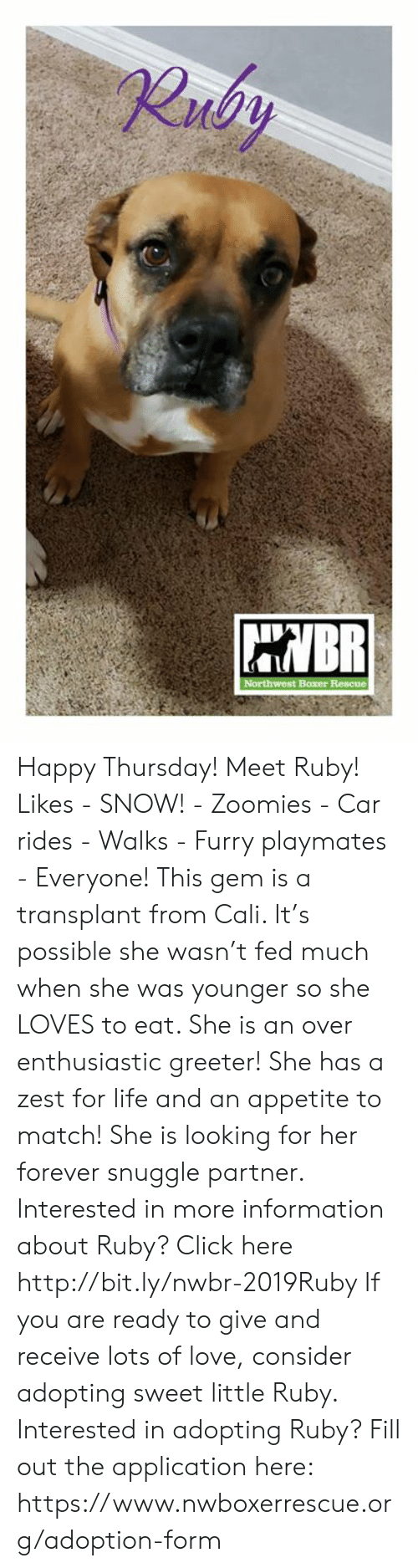 playmates: Happy Thursday! Meet Ruby!    Likes - SNOW!  - Zoomies - Car rides - Walks - Furry playmates - Everyone!  This gem is a transplant from Cali.  It's possible she wasn't fed much when she was younger so she LOVES to eat.  She is an over enthusiastic greeter! She has a zest for life and an appetite to match! She is looking for her forever snuggle partner.  Interested in more information about Ruby? Click here http://bit.ly/nwbr-2019Ruby   If you are ready to give and receive lots of love, consider adopting sweet little Ruby. Interested in adopting Ruby? Fill out the application here: https://www.nwboxerrescue.org/adoption-form