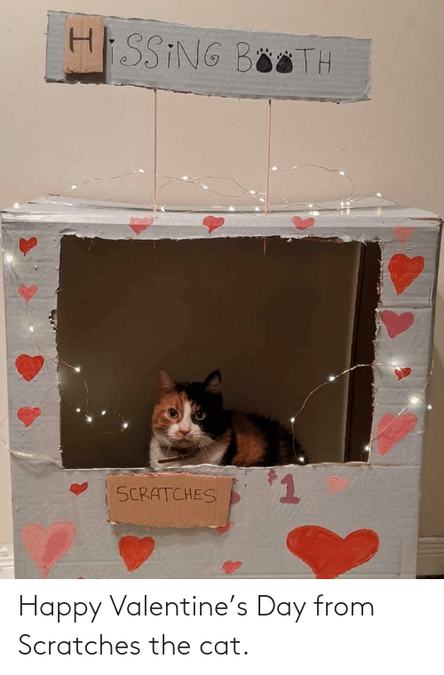 valentine: Happy Valentine's Day from Scratches the cat.