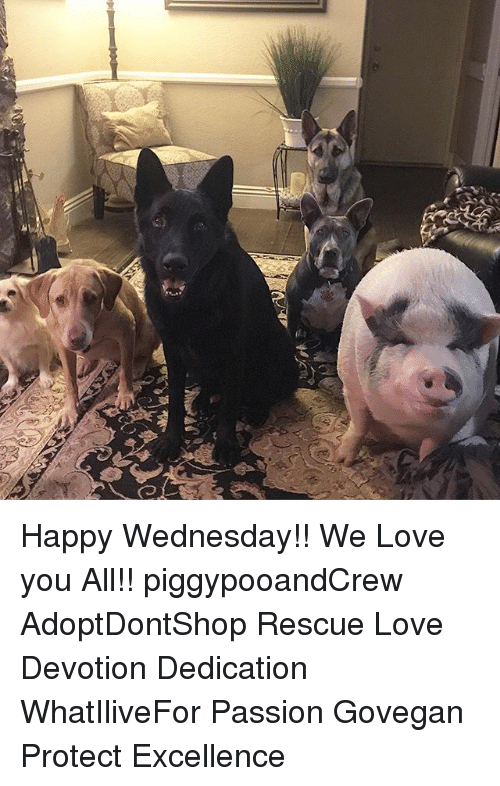 Happy Wednesday We Love You All Piggypooandcrew Adoptdontshop