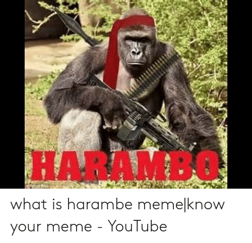 What Is Harambe: HARAMBO what is harambe meme|know your meme - YouTube