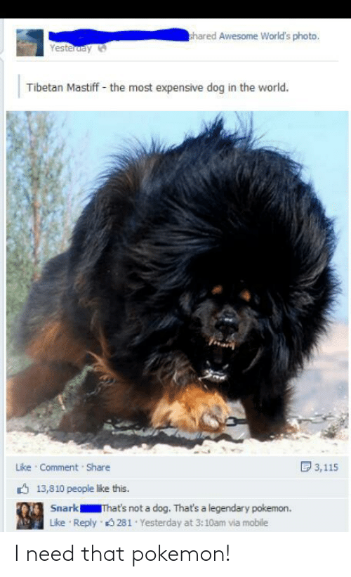 expensive: hared Awesome World's photo,  Yesteruay  Tibetan Mastiff - the most expensive dog in the world.  D 3,115  Like Comment Share  6 13,810 people like this.  Snark  That's not a dog. That's a legendary pokemon.  Reply 3 281 Yesterday at 3:10am via mobile  Like I need that pokemon!