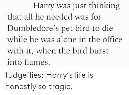 Being Alone, Life, and Target: Harry was just thinking  that all he needed was for  Dumbledore's pet bird to die  while he was alone in the office  with it, when the bird burst  into flames. fudgeflies: Harry's life is honestly so tragic.