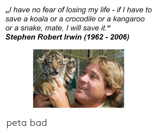 "koala: ,,/ have no fear of losing my life - if I have to  save a koala or a crocodile or a kangaroo  or a snake, mate, I will save it.""  Stephen Robert Irwin (1962 - 2006)  35 peta bad"