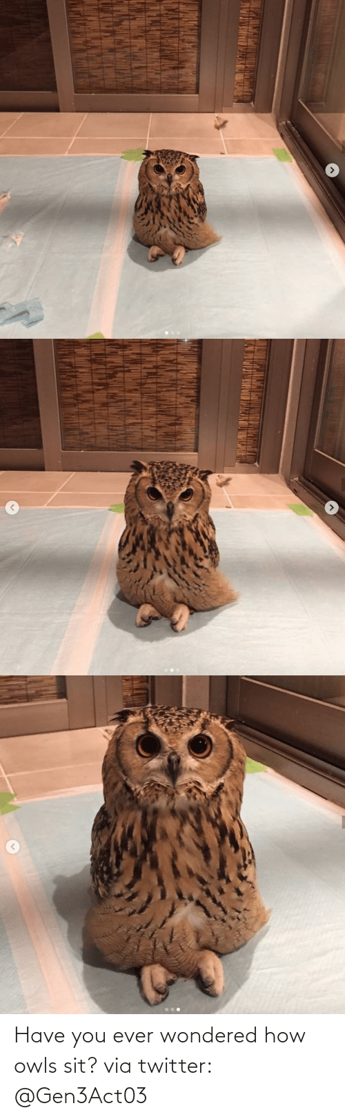 Have You: Have you ever wondered how owls sit? via twitter: @Gen3Act03