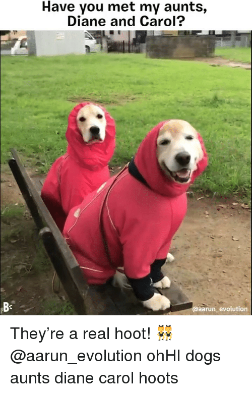 Dogs, Memes, and Evolution: Have you met my aunts,  Diane and Carol?  B-  @aarun evolution They're a real hoot! 👯♀️ @aarun_evolution ohHI dogs aunts diane carol hoots