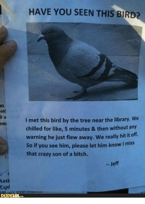 Dank, 🤖, and Son: HAVE YOU SEEN THIS BIRD?  60:  l met this bird by the tree near the library. We  mui  chilled for like, 5 minutes & then without any  warning he just flew away. We really hit it off.  So if you see him, please let him know l miss  that crazy son of a bitch.  Jeff  Anth  Expl  DUDEL Lam