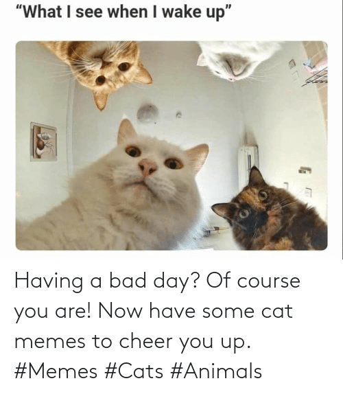 Course: Having a bad day? Of course you are! Now have some cat memes to cheer you up. #Memes #Cats #Animals