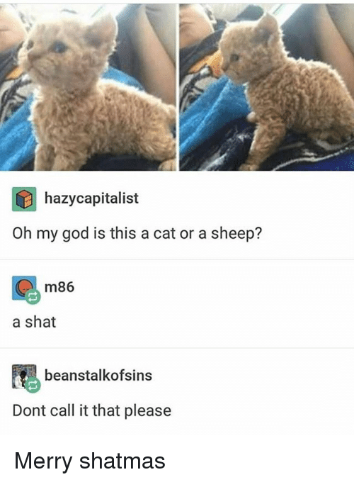 God, Memes, and Oh My God: hazycapitalist  Oh my god is this a cat or a sheep?  m86  a shat  beanstalkofsins  Dont call it that please Merry shatmas
