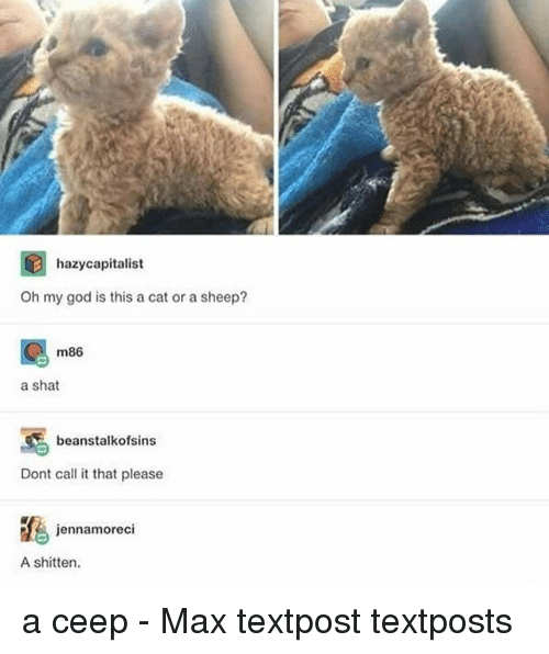 God, Memes, and Oh My God: hazycapitalist  Oh my god is this a cat or a sheep?  m86  a shat  beanstalkofsins  Dont call it that please  jennamoreci  A shitten. a ceep - Max textpost textposts
