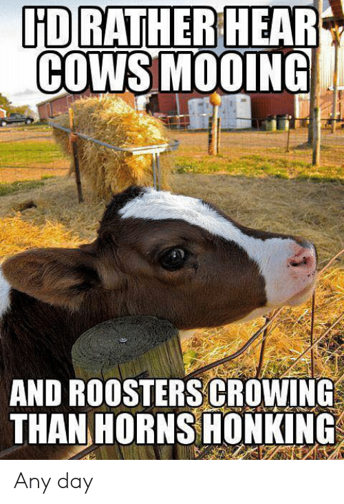 Dank, 🤖, and Day: HD RATIHERIHEAR  COWSMOOING  AND ROOSTERS|GROWİNG  THANHORNSHONKİNG Any day