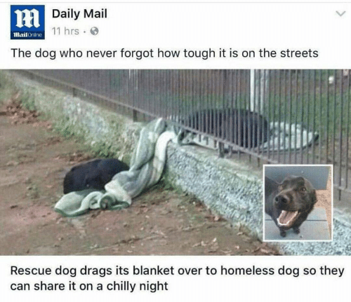 Homeless, Streets, and Mail: HDaily Mail  11 hrs  MailOnline  The dog who never forgot how tough it is on the streets  Rescue dog drags its blanket over to homeless dog so they  can share it on a chilly night