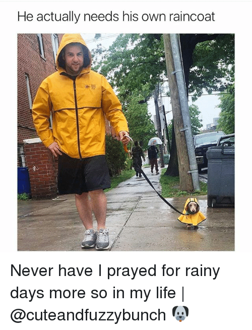 Life, Memes, and Never: He actually needs his own raincoat Never have I prayed for rainy days more so in my life | @cuteandfuzzybunch 🐶