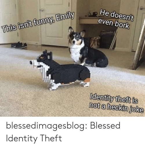 Heckin: He doesn't  even bork  This isn't funny, Emily  Identity theft is  not a heckin joke blessedimagesblog:  Blessed Identity Theft