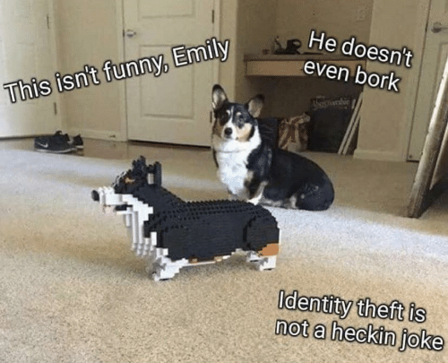 Theft: He doesn't  even bork  This isn't funny, Emily  Identity theft is  not a heckin joke