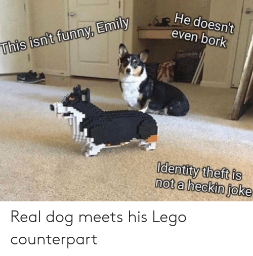 Funny, Lego, and Dog: He doesn't  even bork  whie  This isn't funny, Emily  Identity theft is  not a heckin joke Real dog meets his Lego counterpart