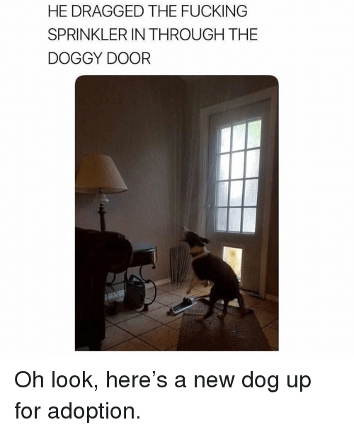Fucking, Memes, and 🤖: HE DRAGGED THE FUCKING  SPRINKLER IN THROUGH THE  DOGGY DOOR Oh look, here's a new dog up for adoption.