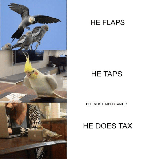 Taps: HE FLAPS  HE TAPS  BUT MOST IMPORTANTLY  HE DOES TAX