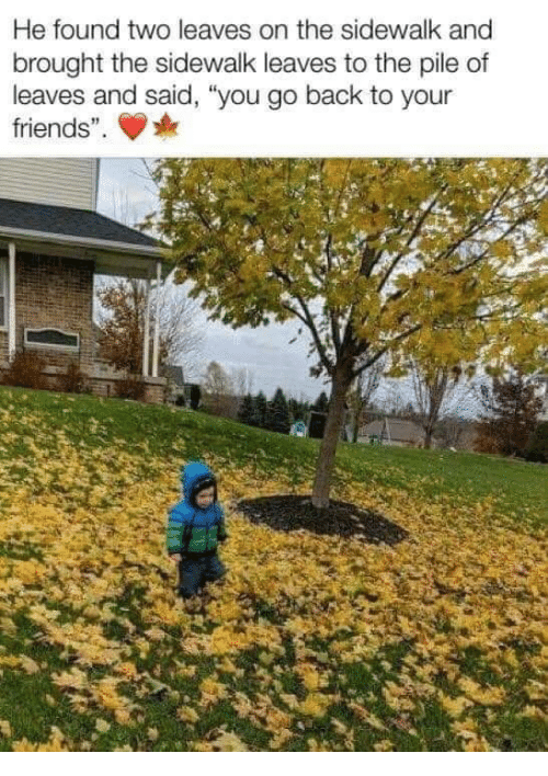 """Friends, Back, and You: He found two leaves on the sidewalk and  brought the sidewalk leaves to the pile of  leaves and said, """"you go back to your  friends""""."""