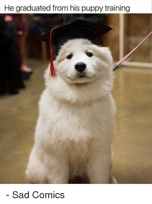 Memes, Puppy, and Sad: He graduated from his puppy training - Sad Comics
