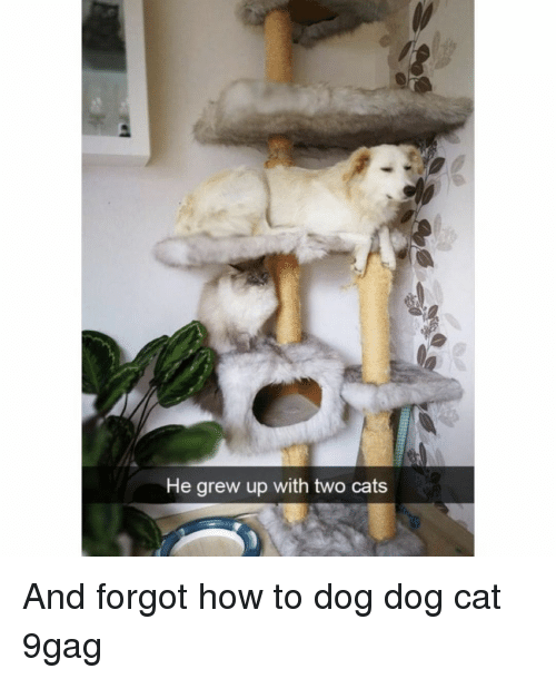 9gag, Cats, and Memes: He grew up with two cats And forgot how to dog⠀ dog cat 9gag