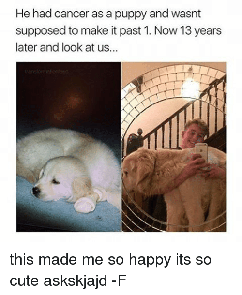 Puppies, Puppy, and Relatable: He had cancer as a puppy and wasnt  supposed to make it past 1. Now 13 years  later and look at us... this made me so happy its so cute askskjajd -F