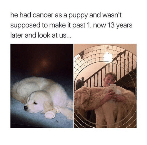 Cancer, Puppy, and Make: he had cancer as a puppy and wasn't  supposed to make it past 1. now 13 years  later and look at us...
