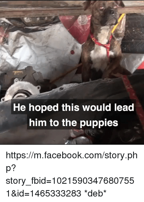 Facebook, Memes, and Puppies: He hoped this would lead  him to the puppies https://m.facebook.com/story.php?story_fbid=10215903476807551&id=1465333283 *deb*