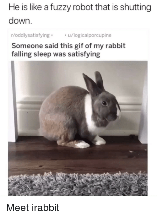 Gif, Memes, and Rabbit: He is like a fuzzy robot that is shutting  down.  r/oddlysatisfyingu/logicalporcupine  Someone said this gif of my rabbit  falling sleep was satisfying Meet irabbit