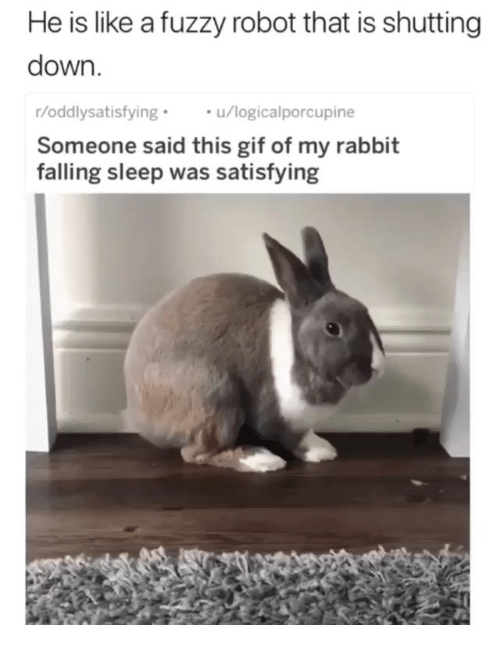Gif, Rabbit, and Sleep: He is like a fuzzy robot that is shutting  down  r/oddlysatisfying  Someone said this gif of my rabbit  falling sleep was satisfying  u/logicalporcupine