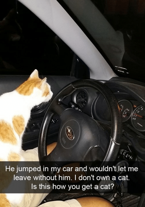 Leave Without: He jumped in my car and wouldn't let me  leave without him. I don't own a cat.  Is this how you get a cat?