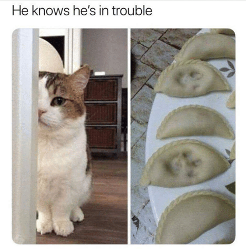Memes, 🤖, and Hes: He knows he's in trouble