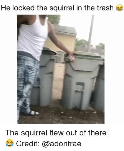 Out Of There: He locked the squirrel in the trash The squirrel flew out of there! 😂 Credit: @adontrae