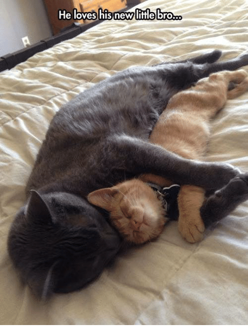 Love, Grumpy Cat, and Lovely: He loves his new little bro