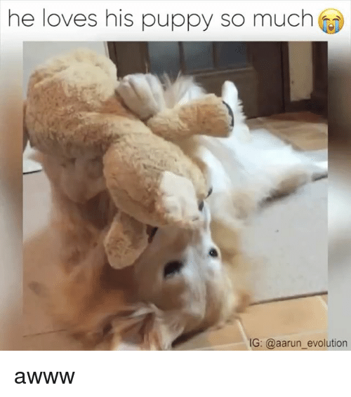 Puppies, Evolution, and Puppy: he loves his puppy so much  IG: @aarun evolution awww